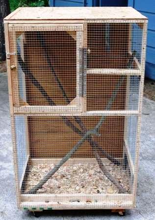 Squirrel Cage Squeakers